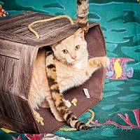 Adopt A Pet :: Albus - Elizabethtown, PA