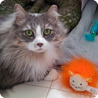 Adopt A Pet :: Mariah - Jackson, NJ
