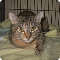 Adopt A Pet :: Adrea - Shelton, WA