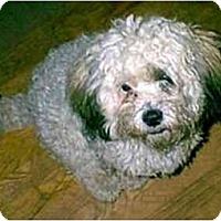Adopt A Pet :: Cosmo - dewey, AZ