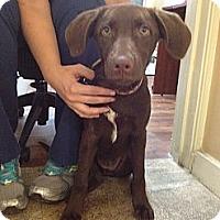 Adopt A Pet :: Hailey - Cumming, GA