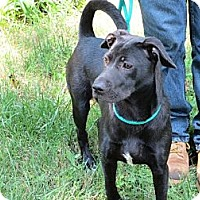 Adopt A Pet :: Suzzie - Pineville, NC
