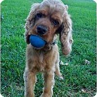 Adopt A Pet :: Dante - Sugarland, TX