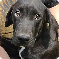 Adopt A Pet :: Jason - Lewisville, IN
