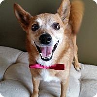 Adopt A Pet :: Mr.Buddy - Baton Rouge, LA