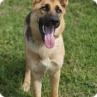 Adopt A Pet :: Kaiser and Kikka - Plainfield, CT