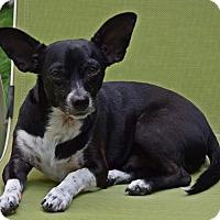 Adopt A Pet :: Zeus - Toronto, ON