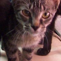 Adopt A Pet :: BOWEN - Morriston, FL