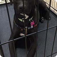 Adopt A Pet :: Mali - Albemarle, NC