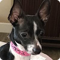 Adopt A Pet :: Tallulah - San Marcos, CA