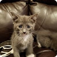 Adopt A Pet :: Echo - Overland Park, KS