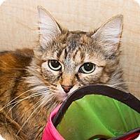 Adopt A Pet :: Bailey - Irvine, CA