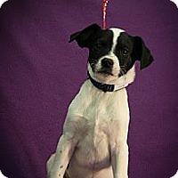 Adopt A Pet :: Lilo - Broomfield, CO