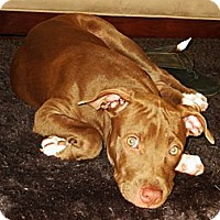 Adopt A Pet :: Dana - Reisterstown, MD