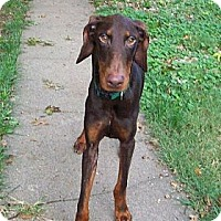 Adopt A Pet :: Walter--adopted!! - New Richmond, OH