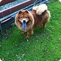 Adopt A Pet :: Hailey - Tillsonburg, ON
