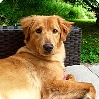 Adopt A Pet :: Lily - Nanuet, NY