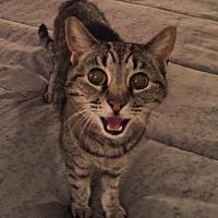 Adopt A Pet :: Belle - Herndon, VA