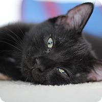 Adopt A Pet :: Skipper - Richmond, VA