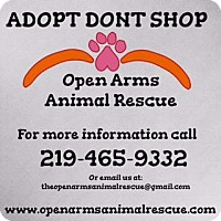 Adopt A Pet :: Other - Valparaiso, IN