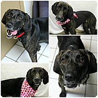 Adopt A Pet :: Felicity - Forked River, NJ
