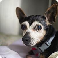 Adopt A Pet :: Nova - Whitehall, PA
