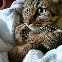 Adopt A Pet :: Komatsu - Crown Point, IN