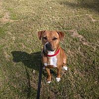 Adopt A Pet :: Lucy Lou - Macon, GA