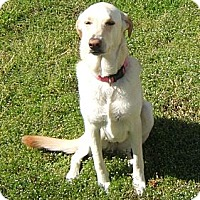 Adopt A Pet :: NELLY - Carrollton, TX