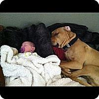 Adopt A Pet :: Blake-Adoption Pending - Phoenix, AZ