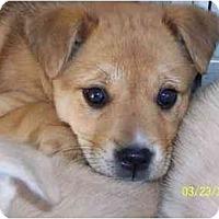Adopt A Pet :: Tiny - Albany, NY