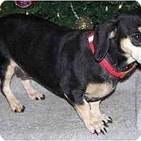 Adopt A Pet :: Pixie - Toronto/Etobicoke/GTA, ON