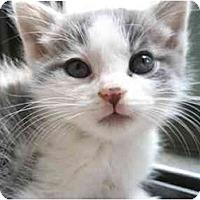 Adopt A Pet :: Hermes - Davis, CA