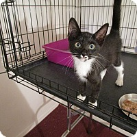 Adopt A Pet :: Willy - Speonk, NY