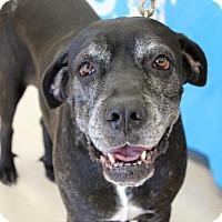 Adopt A Pet :: Bella (Big Girl Bella) - Homestead, FL