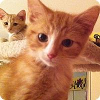 Adopt A Pet :: Robespierre - St. Louis, MO