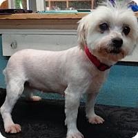 Adopt A Pet :: Amy 2 - Crump, TN