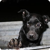 Adopt A Pet :: Waylon Jennings - Brattleboro, VT