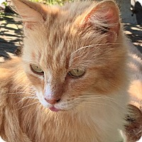 Adopt A Pet :: Katz - Edisto Island, SC