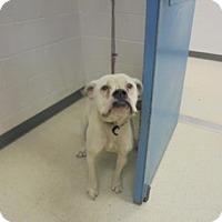 Adopt A Pet :: Daisy - Gulfport, MS