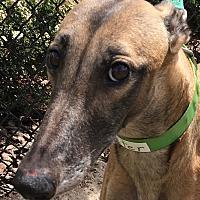 Adopt A Pet :: Wooster - Longwood, FL
