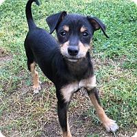Adopt A Pet :: Moxie - Fresno, CA