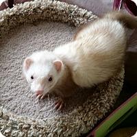 Adopt A Pet :: SASHA & BAILEY - Brandy Station, VA