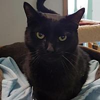 Adopt A Pet :: Mr. Peabody - Columbus, OH