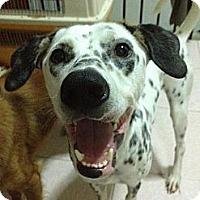 Adopt A Pet :: Pilot - Temple City, CA