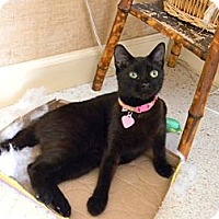 Adopt A Pet :: BLACKY - Naples, FL