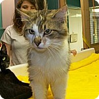 Adopt A Pet :: Dirty Harry - Dover, OH