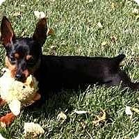Adopt A Pet :: Zyla - Nashville, TN