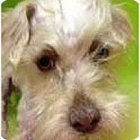 Adopt A Pet :: Rascal - pasadena, CA