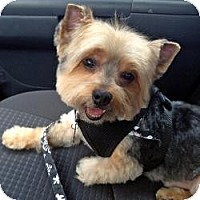 Adopt A Pet :: Valentino - Bunnell, FL
